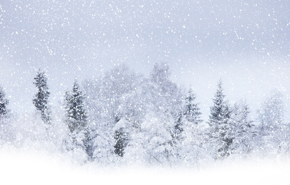 Picture winter, snow, trees, Winter beauty, circle white, flying