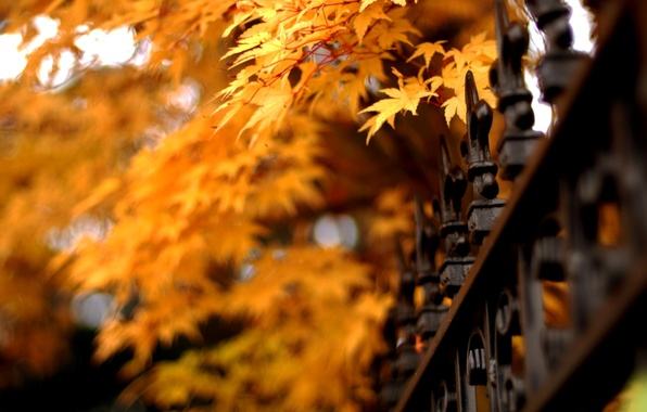 Picture autumn, leaves, nature, fence, grille, nature, autumn, leaves, fence, lattice
