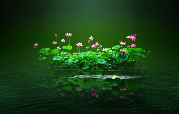 Picture leaves, water, flowers, pond, island