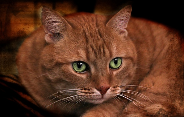 Picture cat, look, texture, muzzle, green eyes, red cat, kotofey