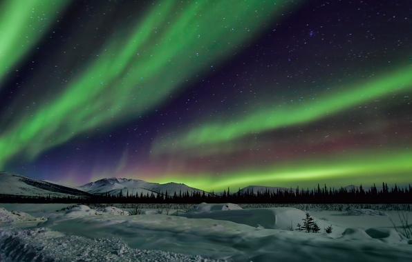 Picture the sky, stars, snow, trees, landscape, mountains, night, Northern lights, Alaska