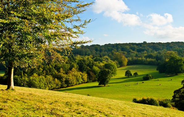 Picture forest, the sky, grass, tree, cow, slope, meadow