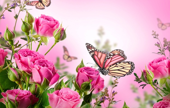Picture butterfly, flowers, roses, flowering, pink, blossom, flowers, beautiful, roses, butterflies