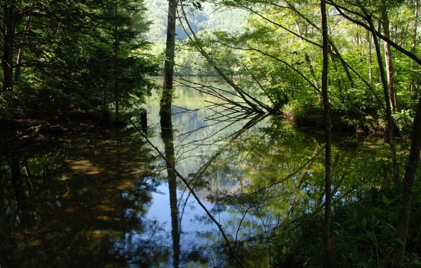Picture Water, Reflection, Trees, River, Leaves, Branches