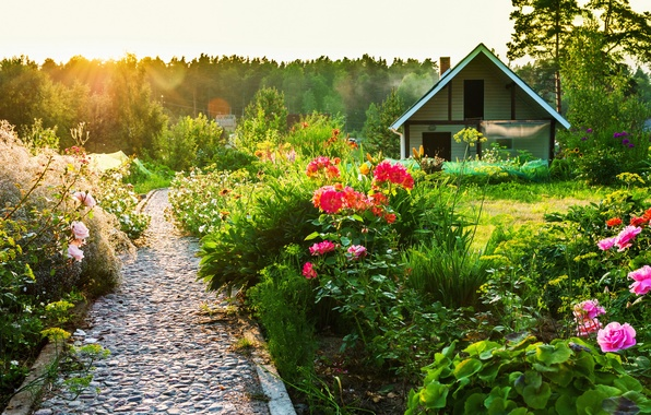 Picture summer, the sun, sunset, flowers, house, track