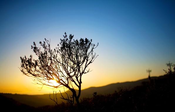 Picture the sky, the sun, light, nature, landscapes, the evening, the bushes, sunset, sunset, bushes, sundown …
