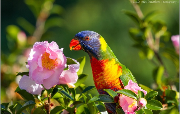 Picture flowers, bird, parrot