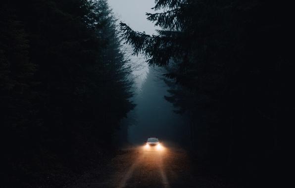 Picture machine, forest, light, darkness, lights
