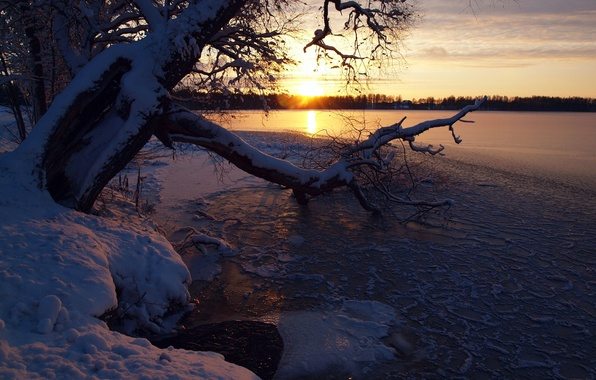 Picture winter, the sky, snow, sunset, river, tree