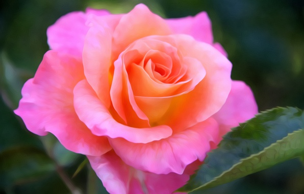 Picture pink, rose, Bud, art, bright, flowering