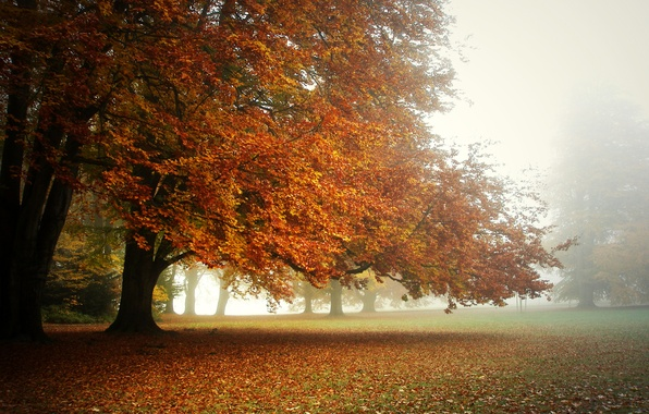 Picture autumn, fog, Park, morning, the crowns of the trees., a carpet of leaves