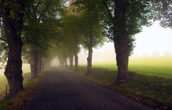 Picture road, grass, asphalt, light, trees, fog, the way, foliage, the fence, field, the fence, road, …