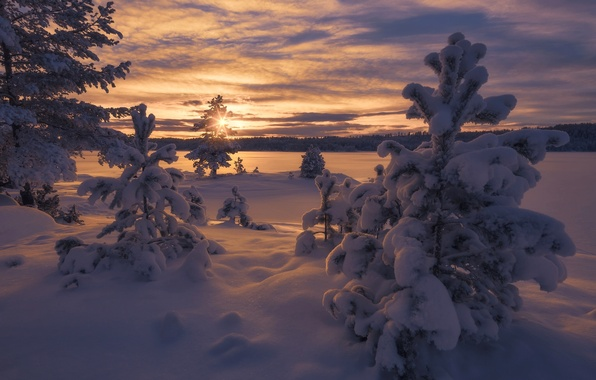 Picture winter, snow, trees, sunset, Norway, the snow, Norway