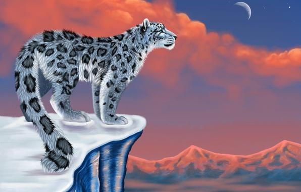 Picture snow, mountains, the moon, figure, IRBIS, snow leopard, snow leopard