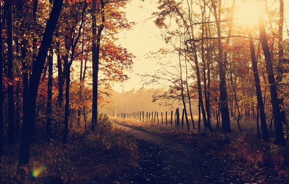 Picture forest, trees, nature, park, autumn, leaves, sunrise, woods, trail, countryside, path, fall, rural