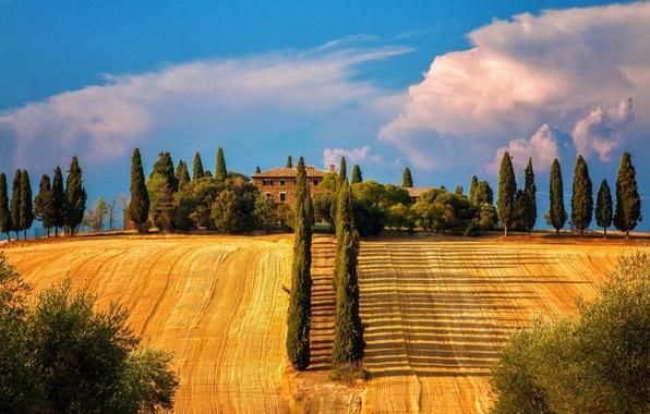 Picture trees, field, Italy, Italy, cypress, Tuscany, Sienna, Tuscany, Siena