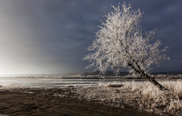 Picture winter, field, tree
