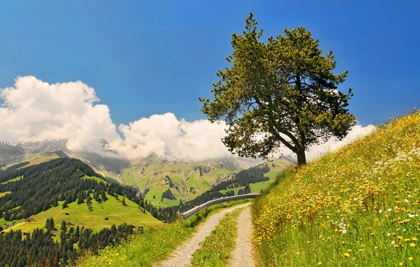 Picture road, forest, the sky, grass, clouds, flowers, mountains, nature, tree, turn