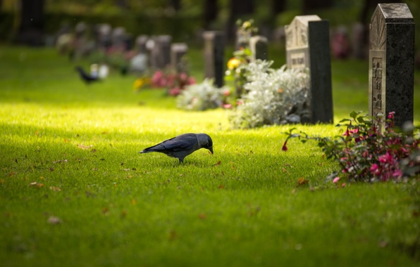 Picture grass, leaves, the sun, trees, flowers, bird, graves, bokeh, headstone