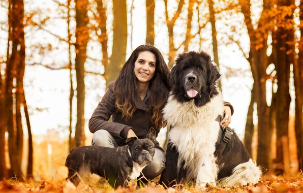 Picture autumn, dogs, woman