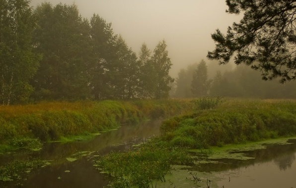 Picture fog, swamp, Forest