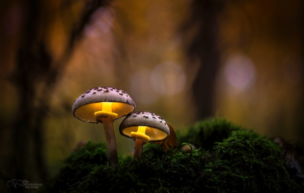 Picture autumn, forest, macro, light, nature, mushrooms