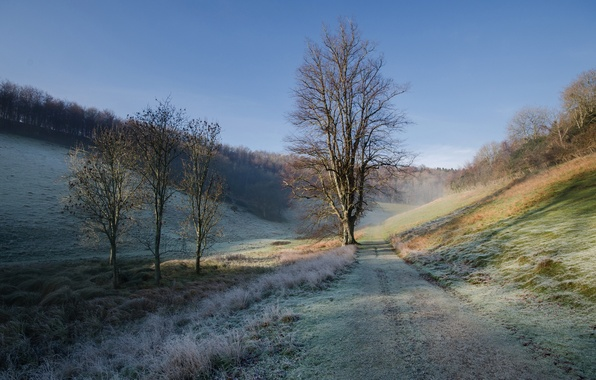 Picture frost, road, autumn, the sky, grass, tree, hills, morning