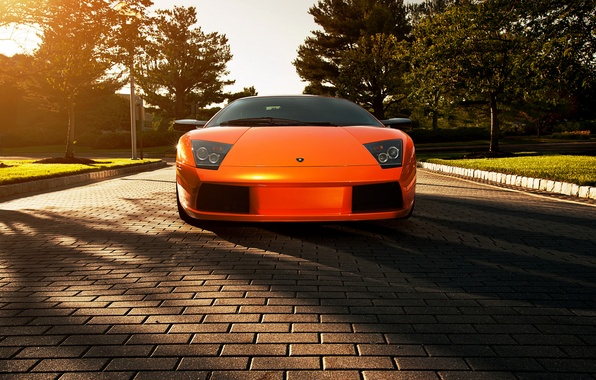 Picture flowers, orange, shadow, Lamborghini, pavers, Blik, Lamborghini, Murcielago, orange, Lamborghini, murciélago