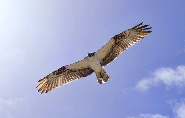 Picture the sky, flight, bird, wings