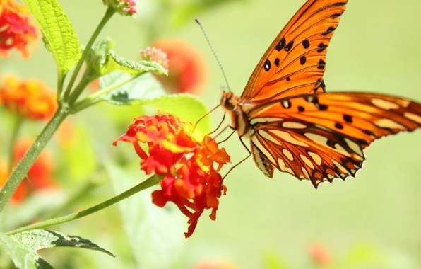Picture flower, macro, photo, butterfly