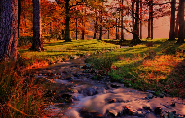 Picture forest, trees, landscape, sunset, nature, forest, river, trees, landscape, nature, sunset, autumn, view, scenery, autumn