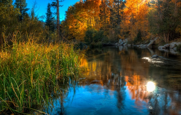 Picture autumn, the sky, grass, trees, lake, stones