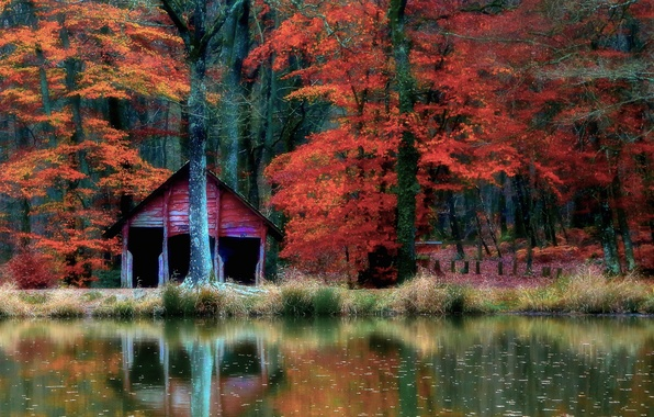 Picture autumn, forest, water, trees, nature, reflection, house