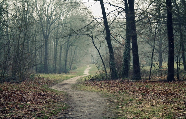 Picture road, autumn, forest, trees, fog, path