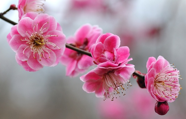 Picture macro, flowers, sprig, tree, bright, focus, blur, branch, petals, Pink, apricot, buds
