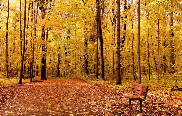 Picture autumn, leaves, trees, Park, landscape, nature, park, autumn, leaves, tree