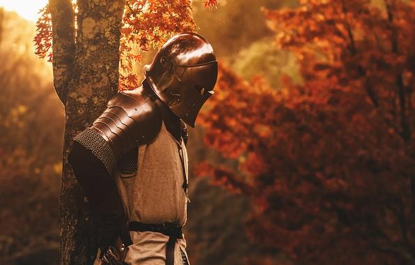 Picture nature, metal, tree, armor, warrior, helmet, knight