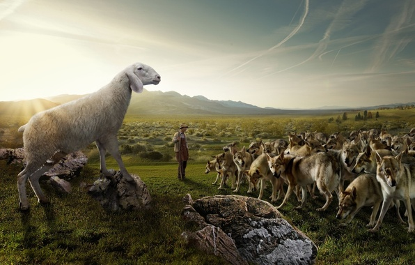 Picture field, the sky, nature, stones, humor, pack, shepherd, sheep, Wolves