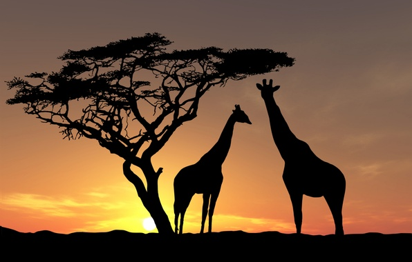 Picture animals, the sky, the sun, trees, the evening, giraffes, Africa, sunset, wildlife
