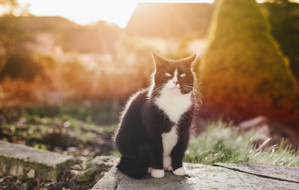 Picture cat, eyes, cat, mustache, look, black and white, sitting