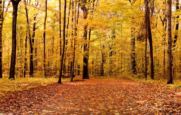 Picture autumn, leaves, trees, landscape, nature, Park, trees, landscape, nature, park, 1920x1200, autumn, leaves