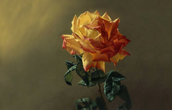 Picture greens, flower, leaves, drops, freshness, Rosa, rose, petals, painting
