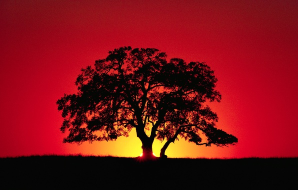 Picture the sky, rays, sunset, tree, horizon, silhouette