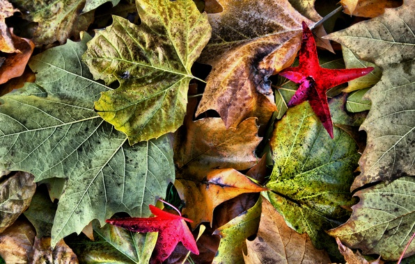 Picture autumn, leaves, macro, nature, color