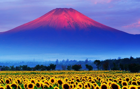 Picture field, the sky, sunset, sunflower, Japan, mount Fuji