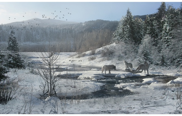 Picture winter, forest, snow, stream, wolves