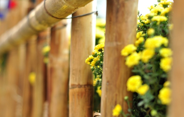 Picture macro, flowers, yellow, background, tree, widescreen, Wallpaper, the fence, fence, the fence, wallpaper, flowers, flower, …