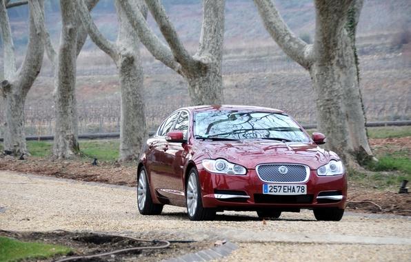 Picture machine, Jaguar, Burgundy