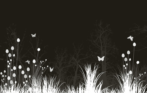 Picture Flowers, Night, Butterfly, Meadow