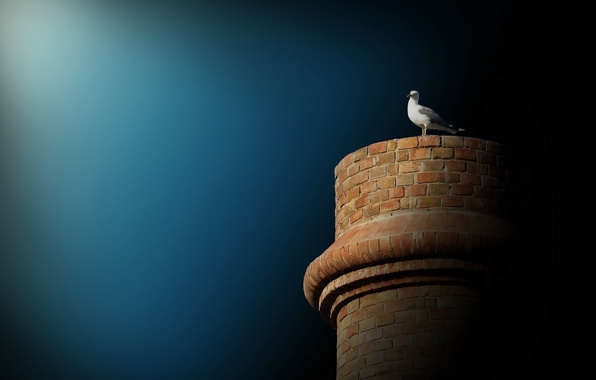 Picture the sky, background, bird